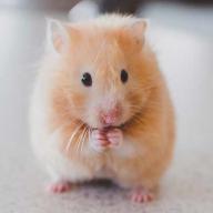 hamsterl